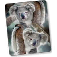 Good Morning Plaid Koala | 8717285150017