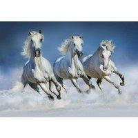 Wizzard and Genius Fotobehang Arabische Paarden | 7611487066118